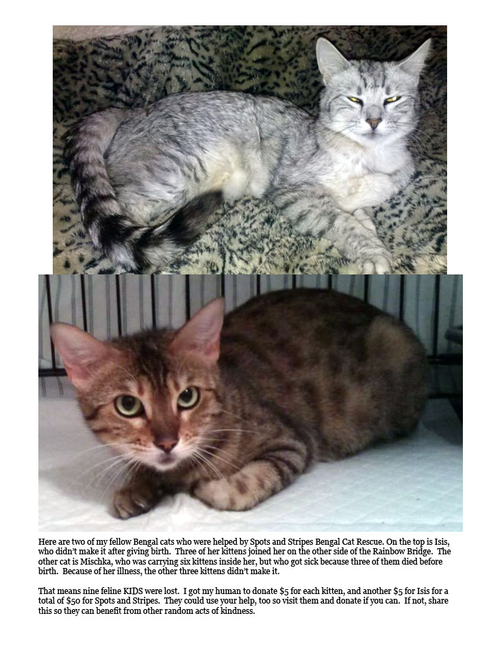 Donation to Spots and Stripes Bengal Cat Rescue for the Giver Games