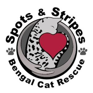 Bagheera the Diabetic Cat loves Spots and Stripes Bengal Cat Rescue