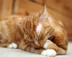 Bagheera the Diabetic Cat's Furiend Lucky