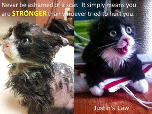 Bagheera the Diabetic Cat Loves Justin's Law!