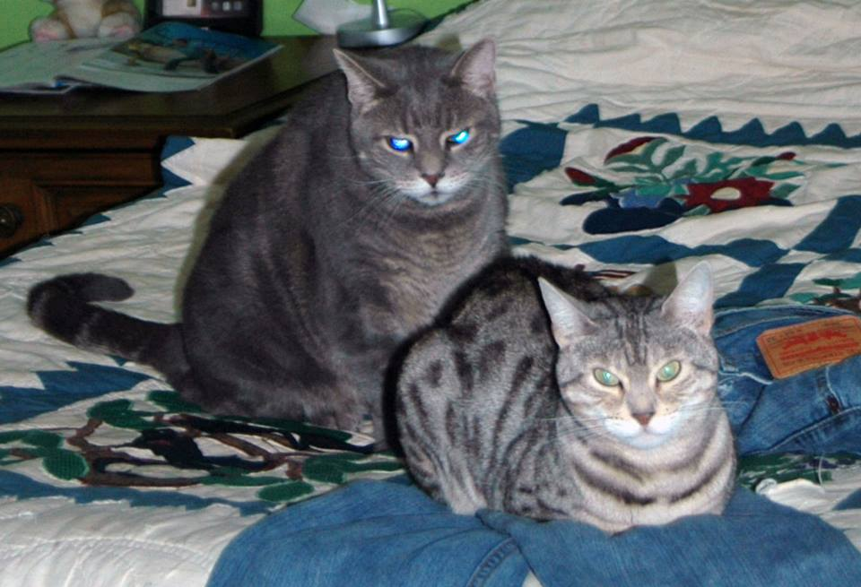 Bagheera and Jacey are Two Cats With a Lot to Say