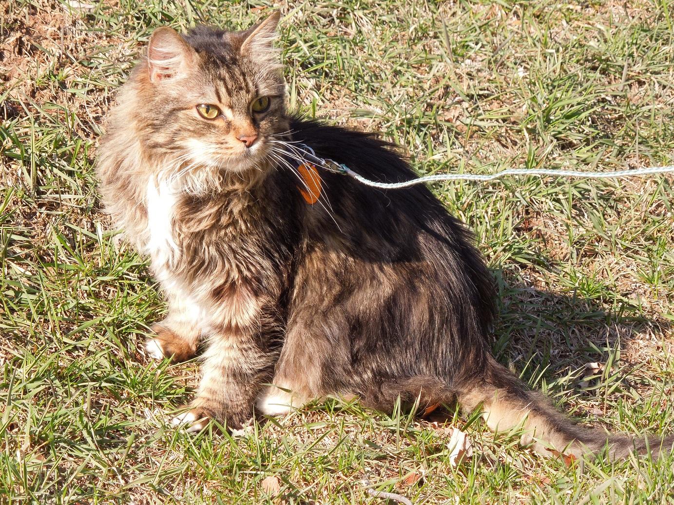 My Fellow Diabetic Cat Piper