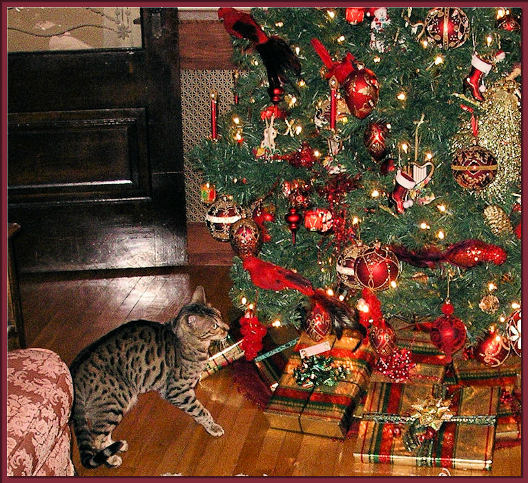 Bagheera the Diabetic Cat — Page 399 of 493 — I am a bengal cat who ...
