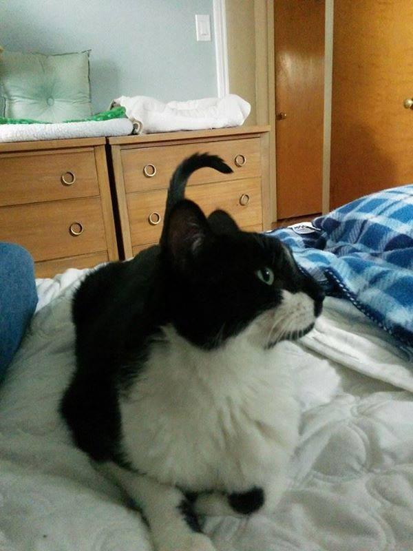 Diabetic Cat Vinny Has a Furever Home