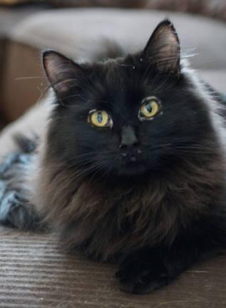 Special Needs Cat Monet Today