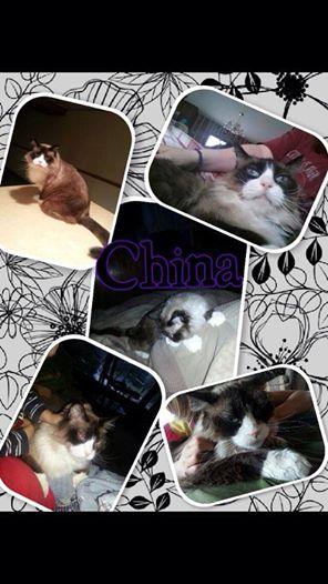 Diabetic Cat China