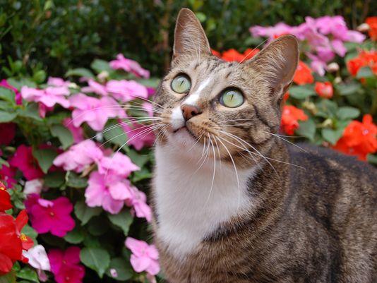 Former Feral Cat Joey