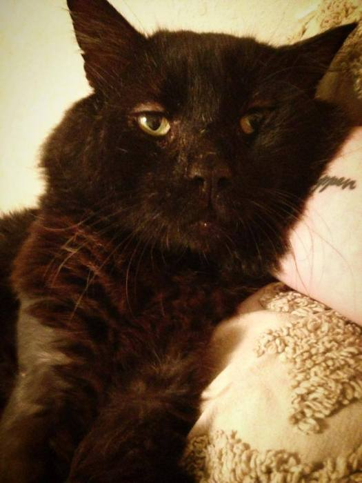 Feral Cat Capone Needs a Home