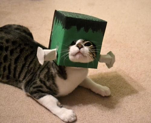 The Only Franken-Feline I Know Of