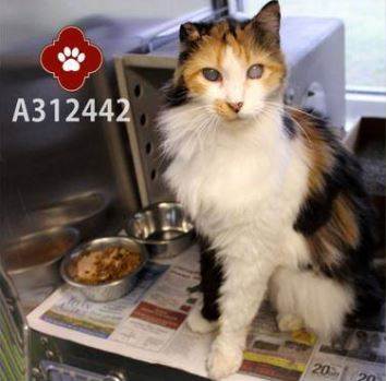 Rose is One of Three Senior Cats Dumped at the Shelter