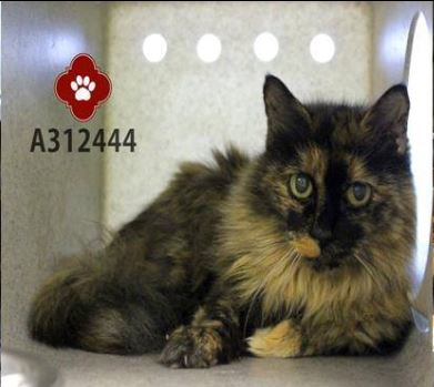 Senior Cat Dorothy Will Join her Sisfurs in a New Home