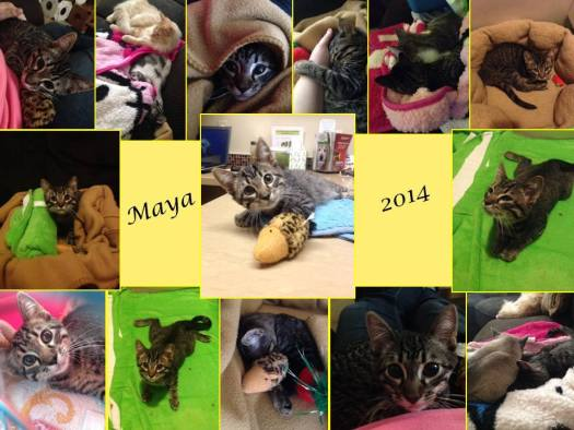 A Tribute to Special Needs Cat Maya