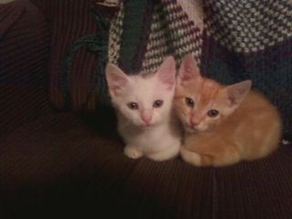 This Bonded Pair Found a Loving Home
