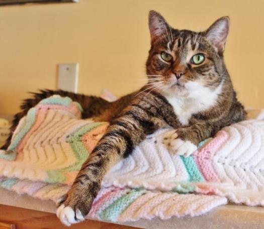 Senior Diabetic Cat Sissy