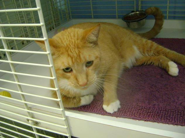 Ginger Boy Ty is Looking for a Furever Home