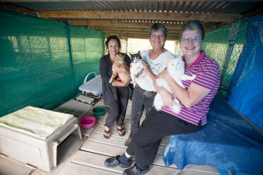 PAWS Volunteers With Adoptable Cats