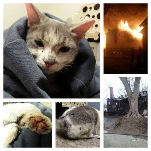 Pictures from Asher's Cat Rescue