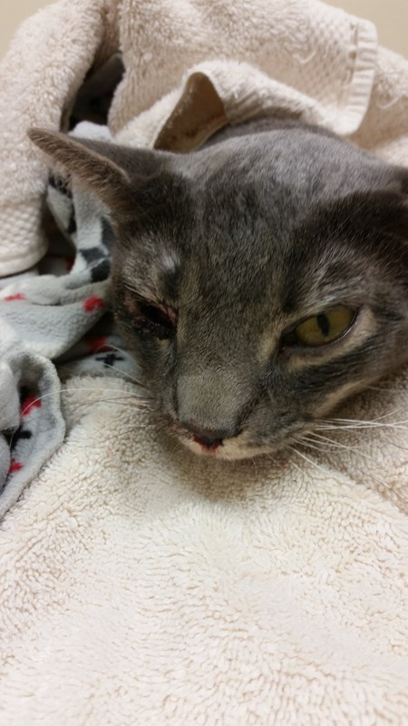 Cat Rescue Requires Surgery