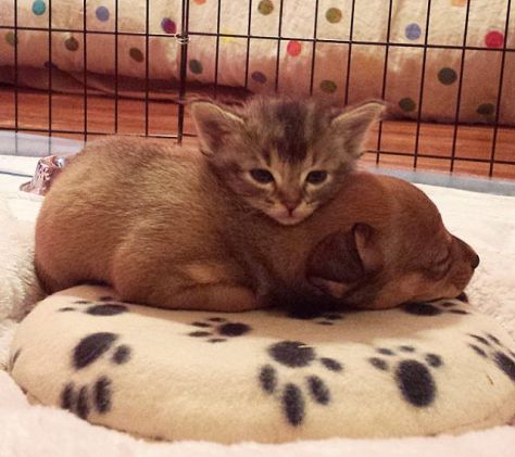 This Bonded Pair is Inseperable