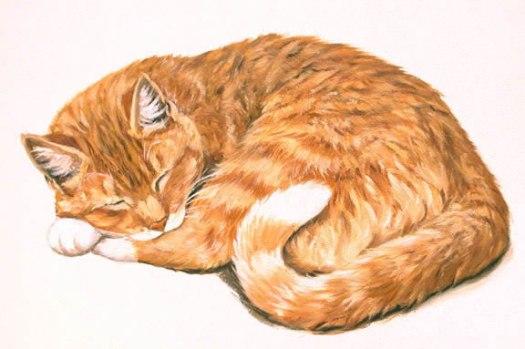 Orange Tabby Lying Down