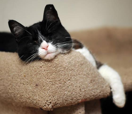 A Blind Cat Enjoying His Life