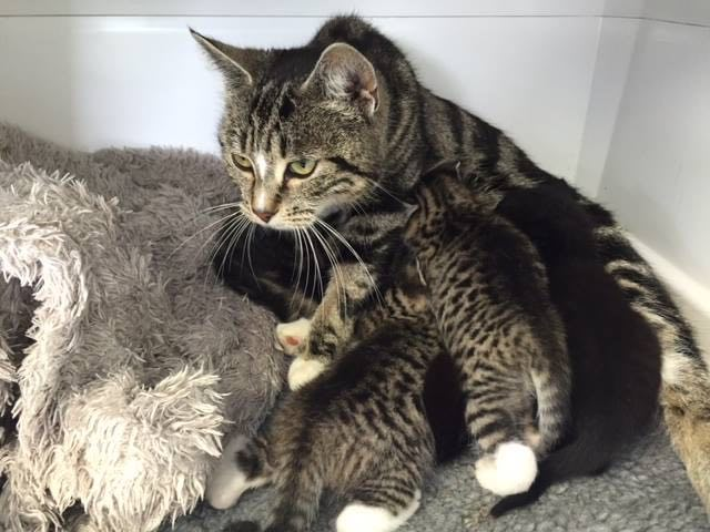This Mother Cat Was Reunited With Her Kittens