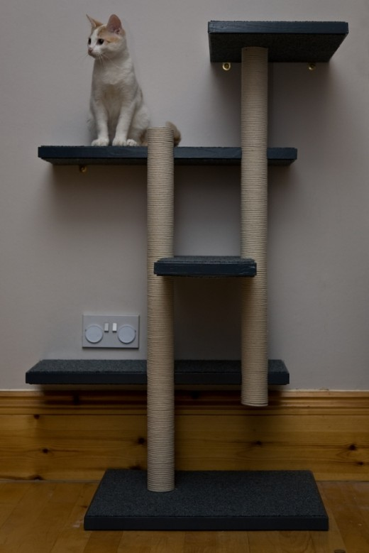 Will the Human Build Me Something Like This?
