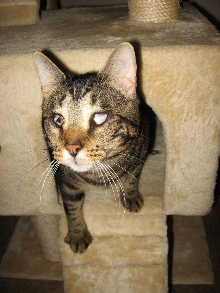 Special Needs Cat Spirit Saying Hello