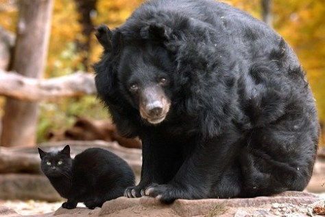 A Bear and a Feline Became Unlikely Friends