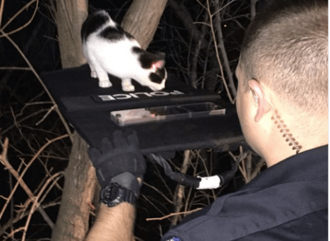 Police Improvised to Complete This Cat Rescue