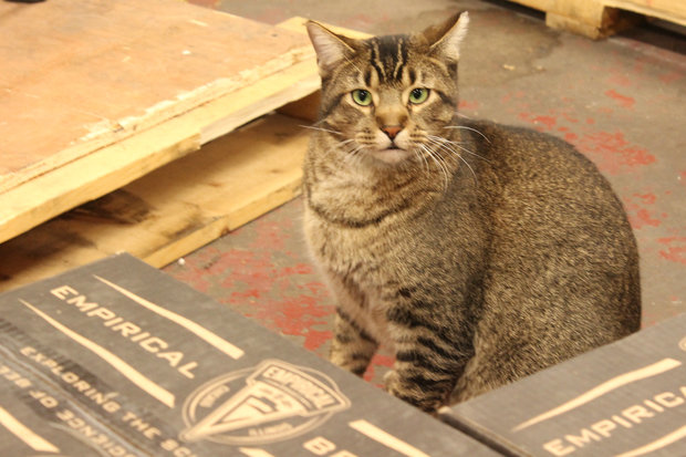 Venkman is One of Four Working Cats at Empirical Brewery