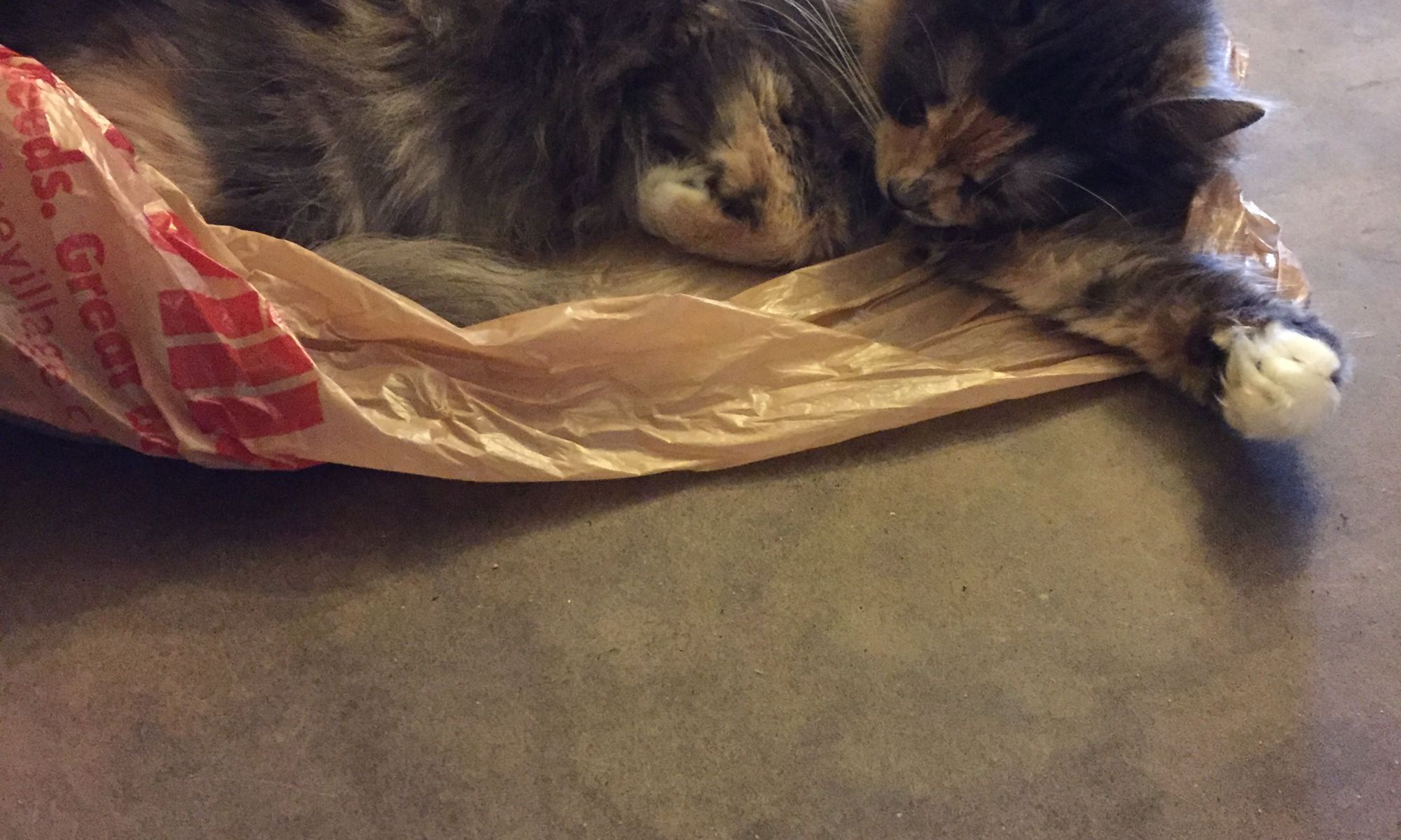 Chewing on Plastic Bags is A Dangerous Cat Behavior