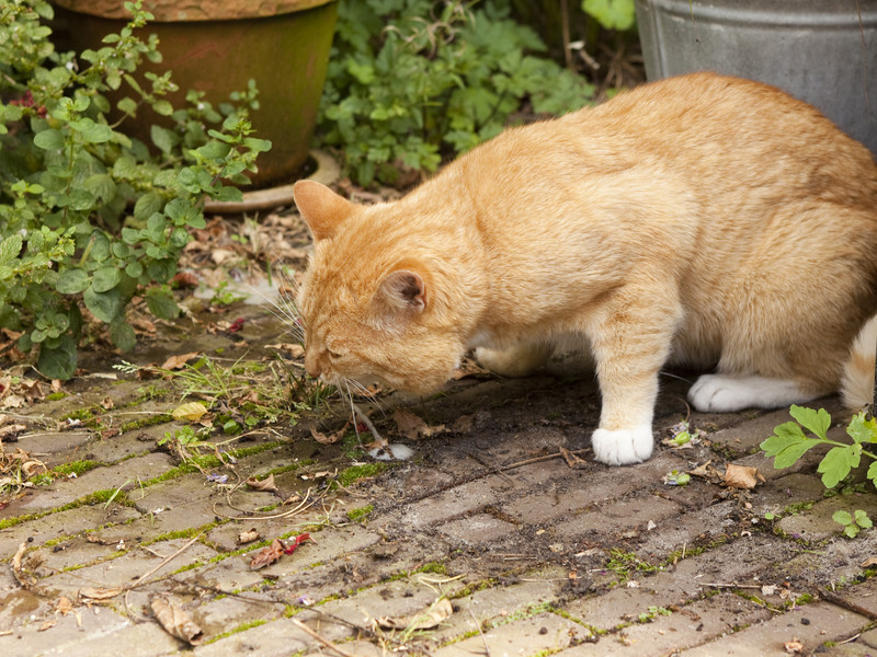 What Does It Mean When A Feline Vomits?