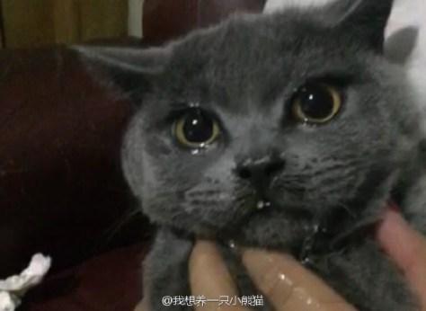This Feline Licked Hot Sauce Like Koji Did