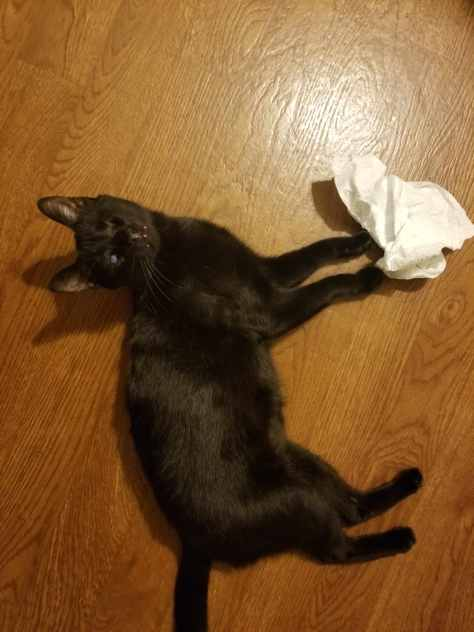 Blind Cat Felix