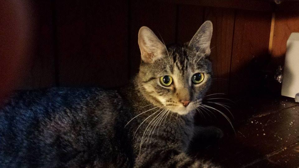 Diabetic Cat Hamilton