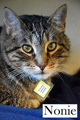 Diabetic Cat Nonie Needs a Home