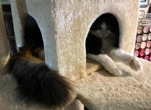 Anakin in His Cat Tree