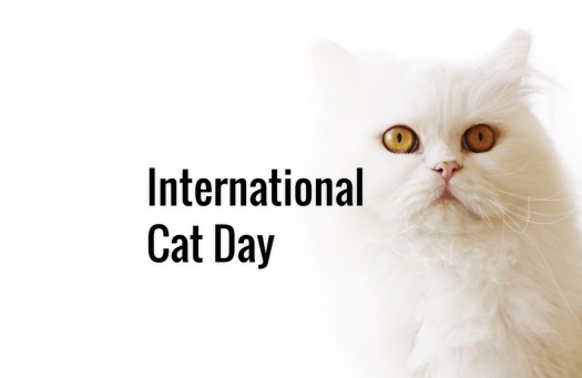 Today is International Cat Day