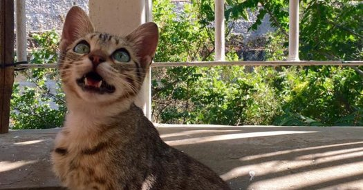A Feline Chattering at a Bird