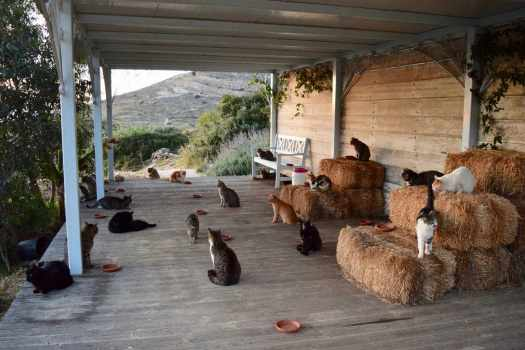 Some of the Felines at God's Little People