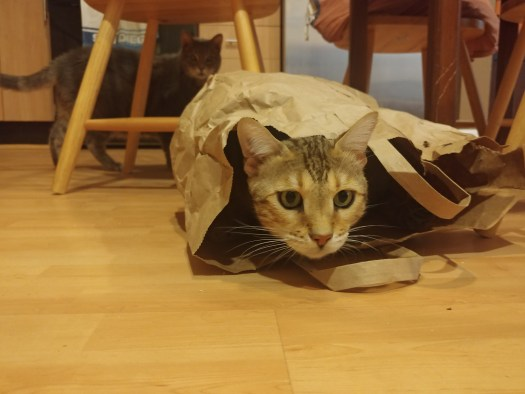 Koji Enjoying the Paper Bag Before he Destroyed it