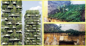 Bagheria come Milano? - Il Bosco verticale e la vegetazione sui tetti fatiscenti