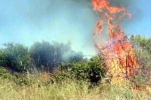 Bagheria: i proprietari di terreni incolti di provvedano alle potature
