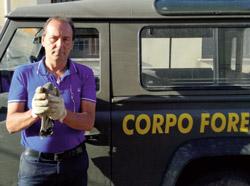 Recuperato un gheppio ferito alle falde di monte Catalfano