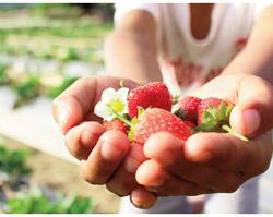 Agricoltura sociale: Un'opportunità per il futuro guardando al passato