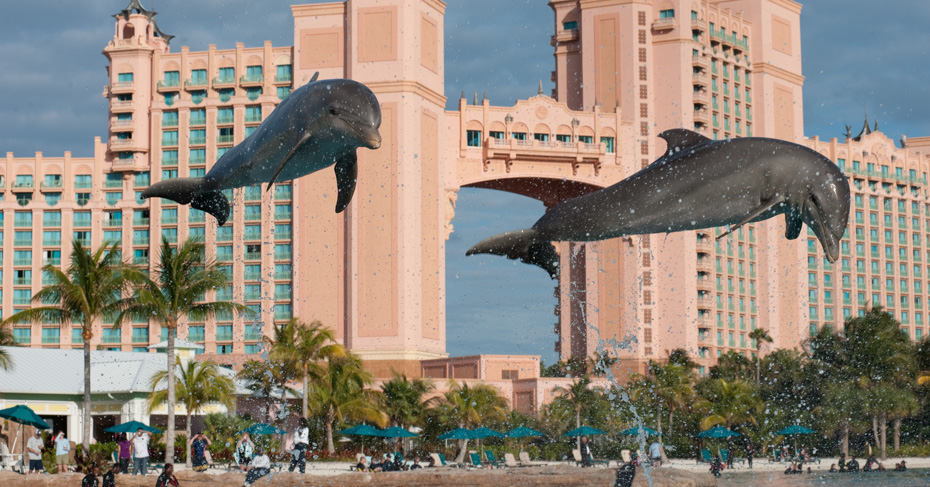 Dolphin Cay at the Atlantis Bahamas. Swim with dolphins on Paradise Island Atlantis. Things to do in Nassau Bahamas. Take a Bahamas Tour with Bahamas Air Tours.