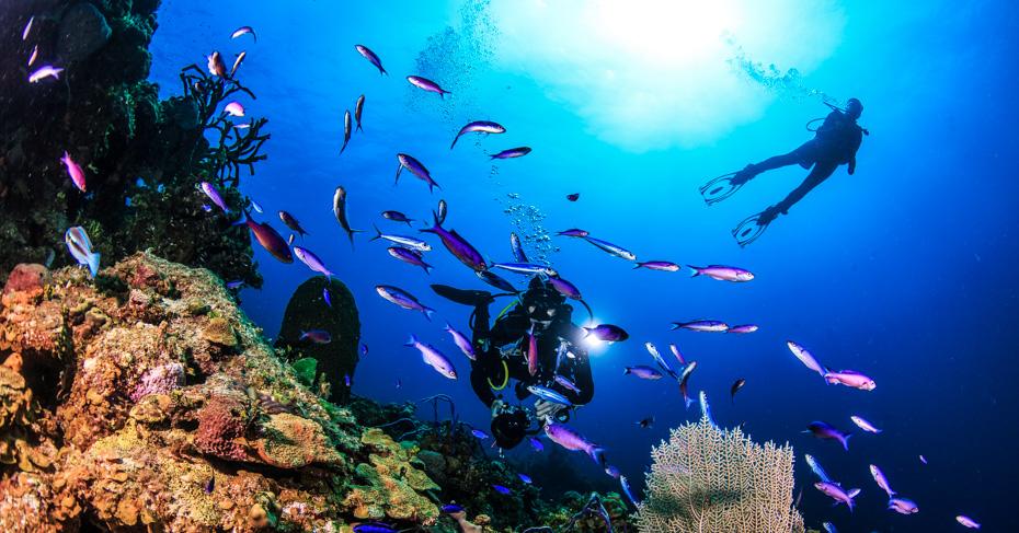 Scuba Diving San Salvador Island bahamas