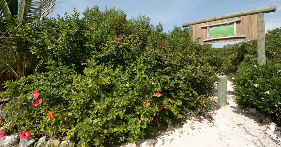 things to do in Bimini Bahamas; visit the Bimini nature trail by taking the miami to bimini ferry or a bimini ferry from west palm beach.