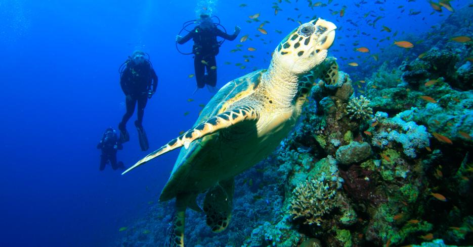 Best Scuba Diving Caribbean in the Bahamas. Explore the best diving bahamas in our guide to Bahamas Scuba Diving